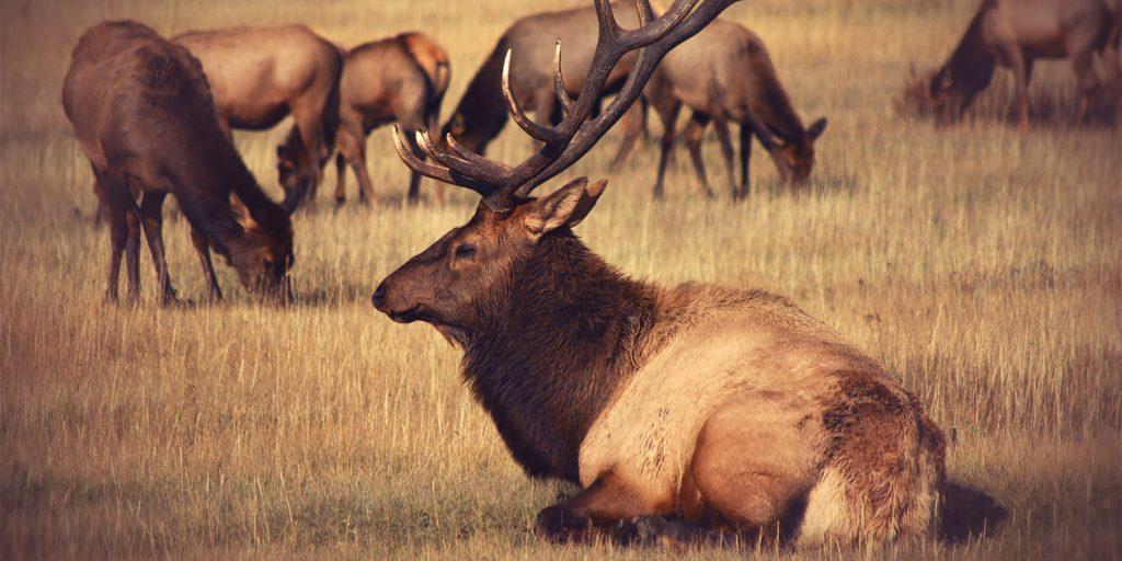 elk field